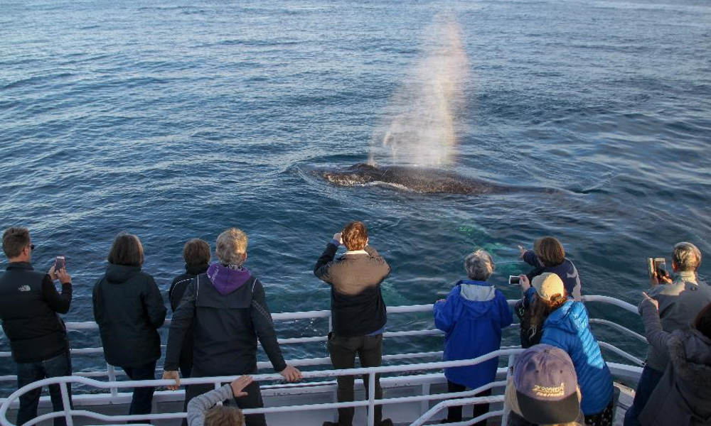 Afternoon Whale Watching Cruise Dunsborough