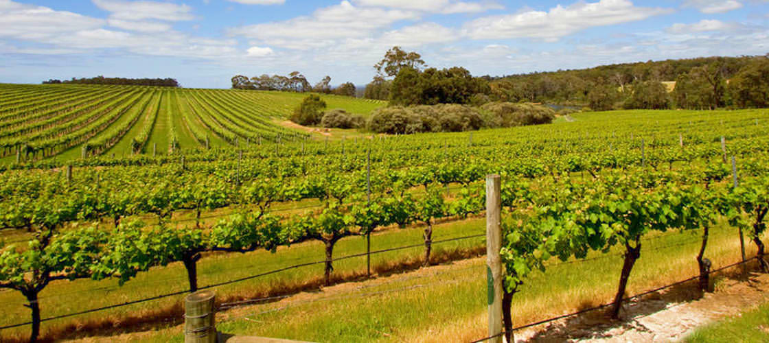 Swan Valley Wineries Afternoon Tour