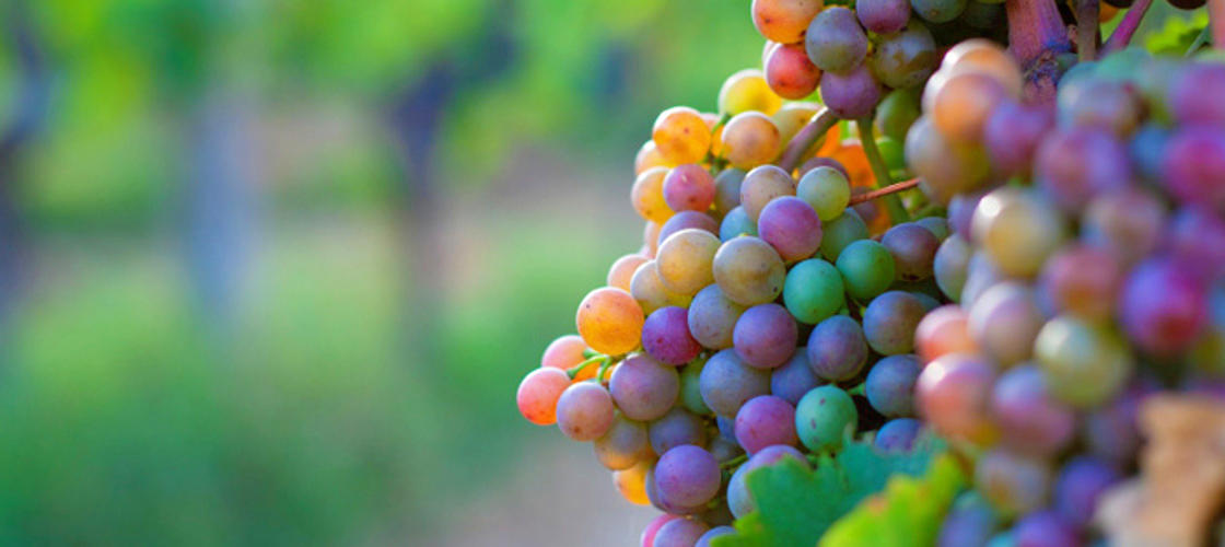 Swan Valley Wineries Full Day Tour with Afternoon Cruise