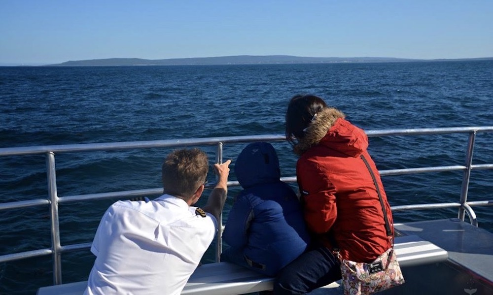 VIP Captains Lounge Whale Watching Experience