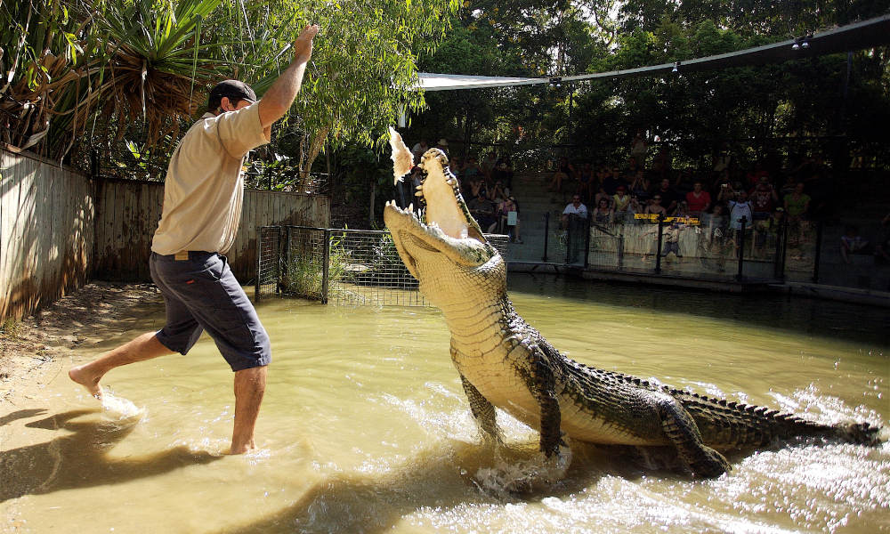 Hartley's Crocodile Adventures Half Day Tour from Cairns