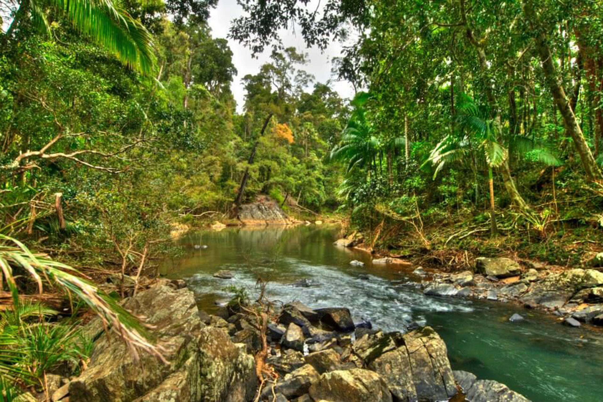 Reef to Rainforest Experience - Reef n Beyond Guided Holidays