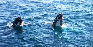 Morning Whale Watching Cruise