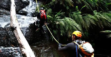 South Coast Canyoning - Rainforest Canyon
