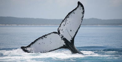 Hervey Bay Afternoon Whale Watch Cruise