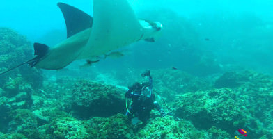 Open Water Diver Course in Byron Bay
