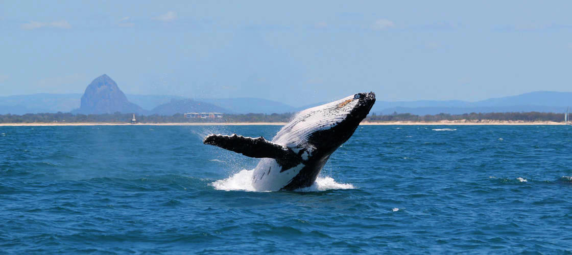 Swim with the Whales Tour from Mooloolaba