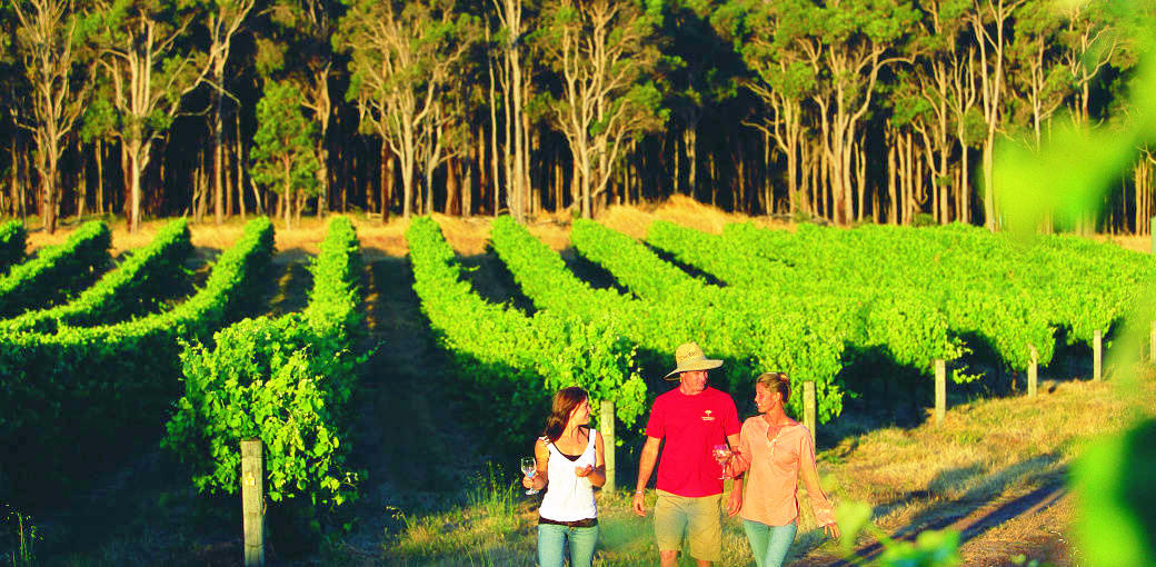 Margaret River Day Tour from Perth