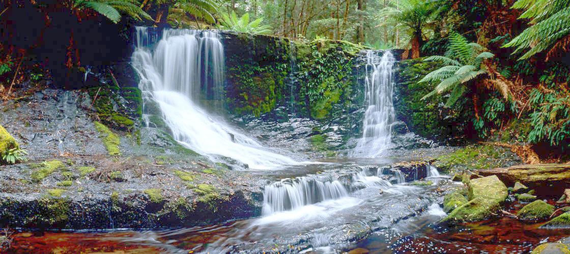 Mount Field Wildlife and Mount Wellington Day Tour