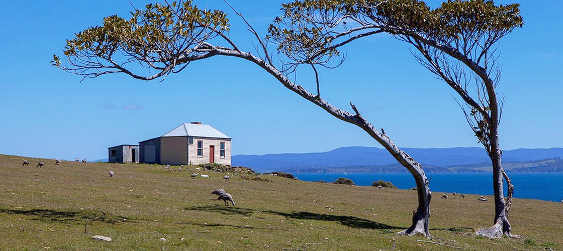 Maria Island National Park Tour from Hobart