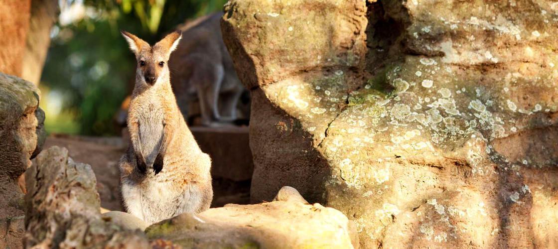 Taronga Zoo Entry including Sky Safari Cable Car and Ferry Pass