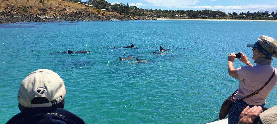 Kangaroo Island Dolphin Safari Cruise