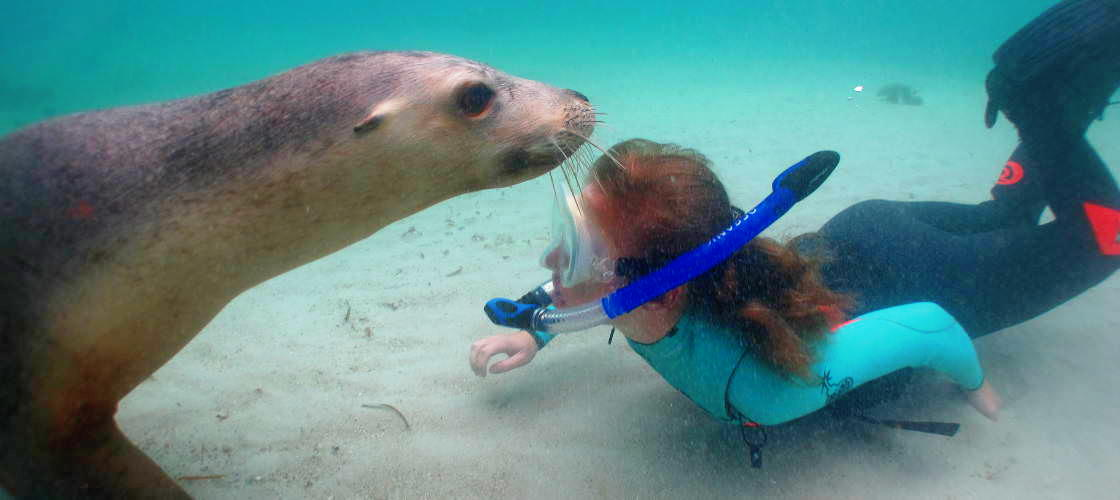Swim with Sea Lions at Port Lincoln