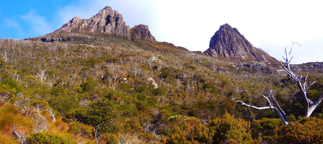 Cradle Mountain Day Tour from Burnie or Devonport