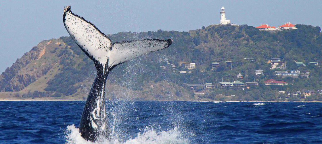 2.5 Hour Whale Watching Byron Bay Tour