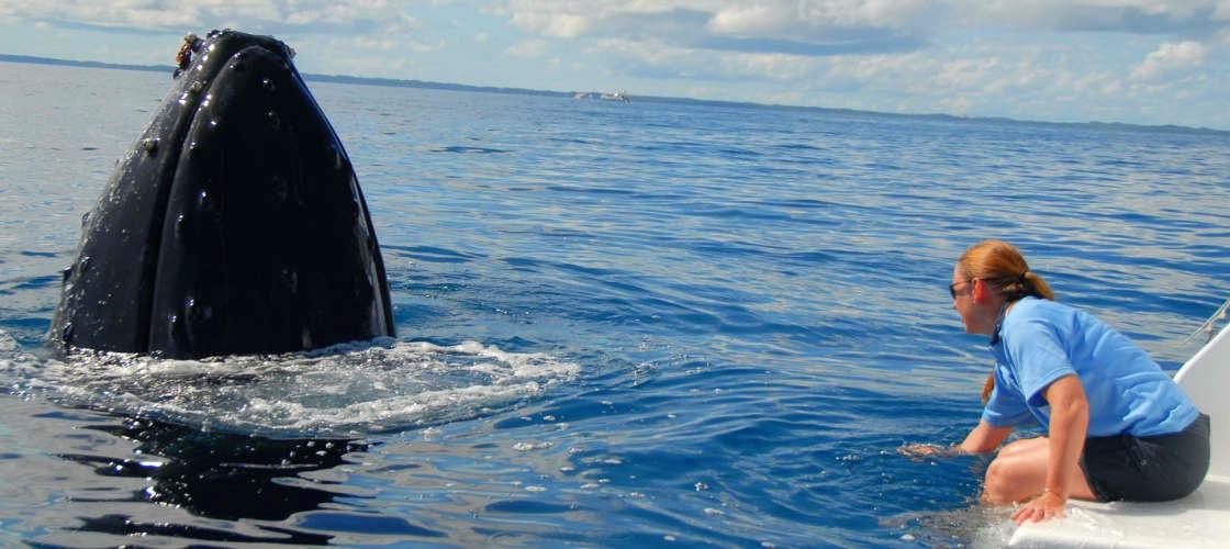 Full Day Whale Watching & Sailing Cruise with Lunch