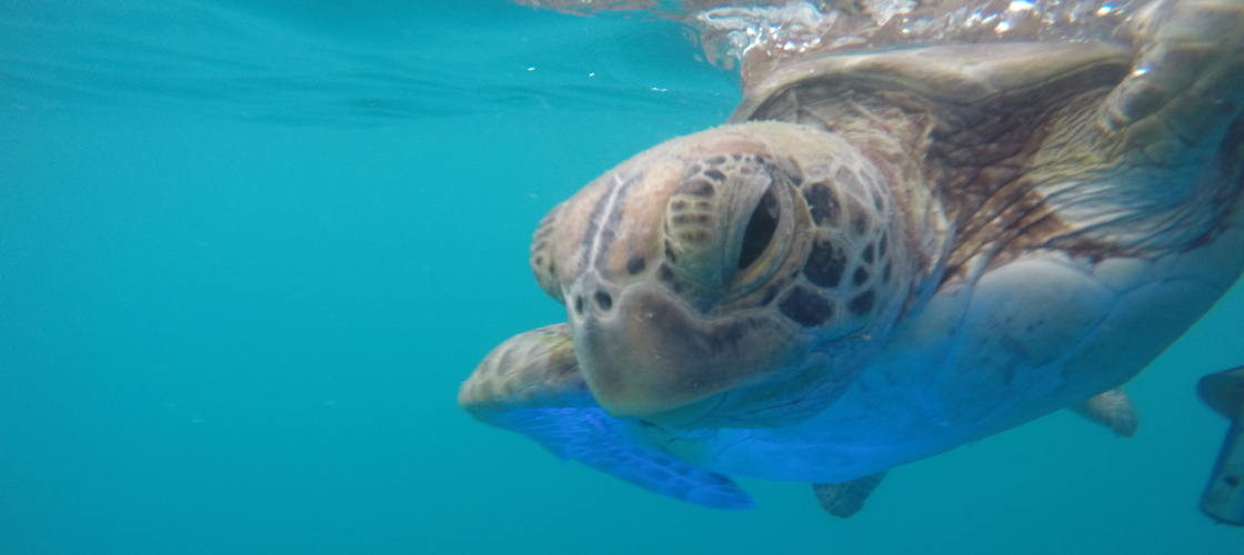 60 Minute Wildlife Eco Bay Cruise from Airlie Beach
