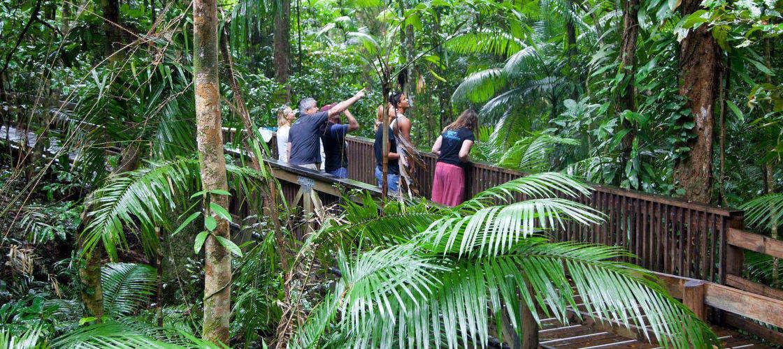 Daintree Rainforest and Mossman Gorge Luxury Tour
