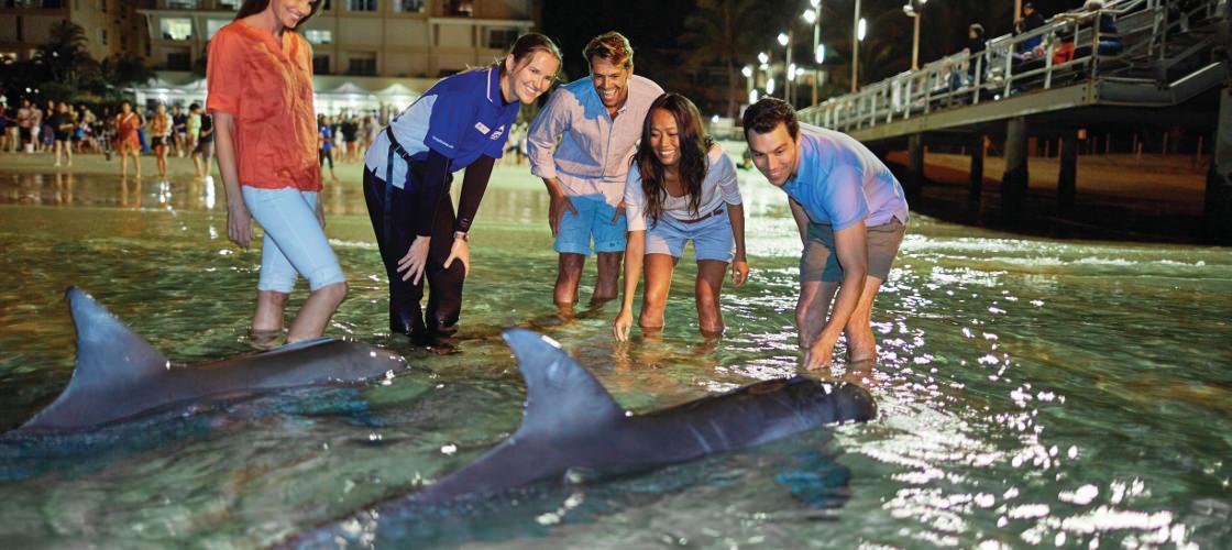 Tangalooma Dolphin Feeding Adventure Tour from Brisbane