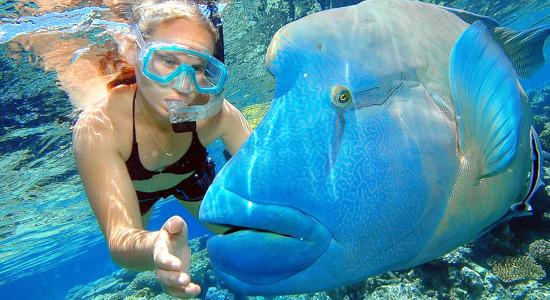 Great Barrier Reef Cruise to Reef Magic Cruises Pontoon