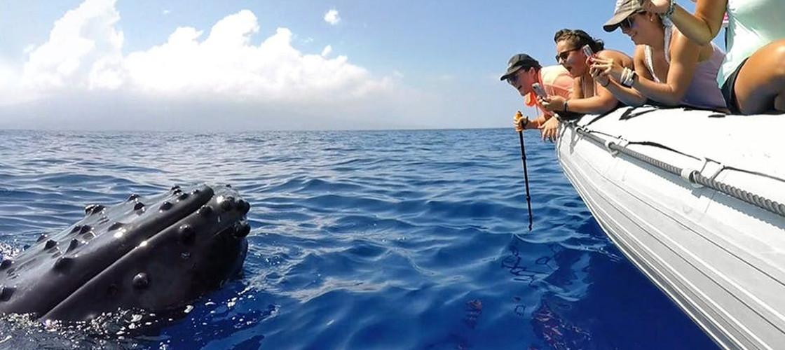 Hervey Bay 3 Hour Whale Watch Cruise