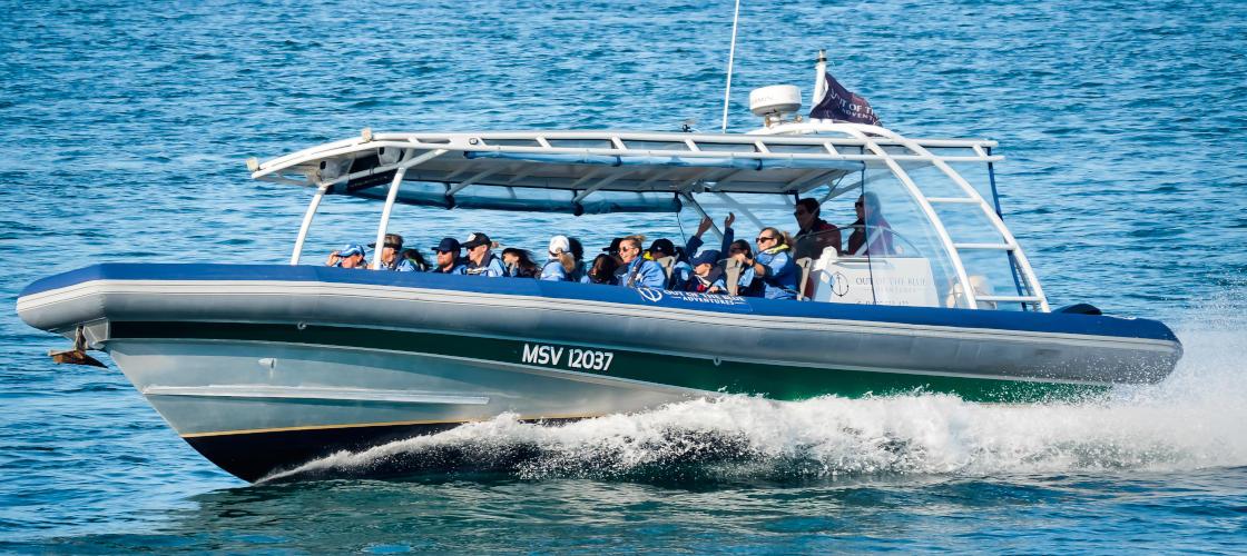 Byron Bay Whale Watching Premier Cruise