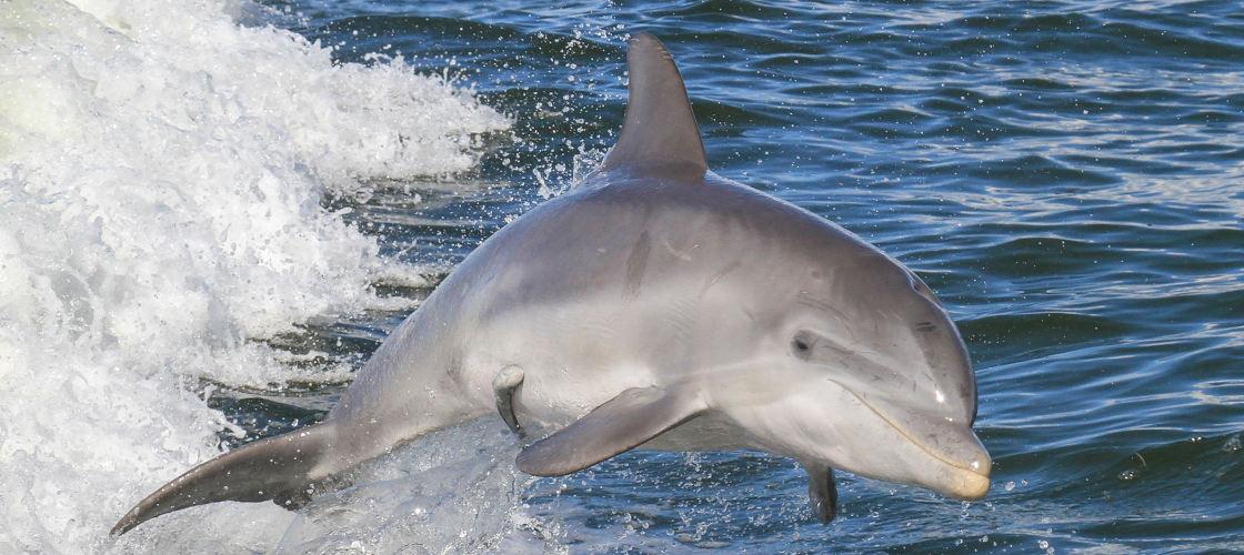 Noosa Dolphin Spotting Cruise