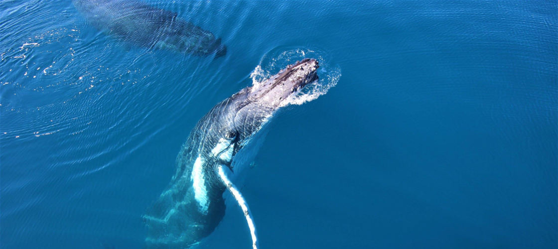 Extended Morning or Afternoon + Sunset Whale Watch Cruise