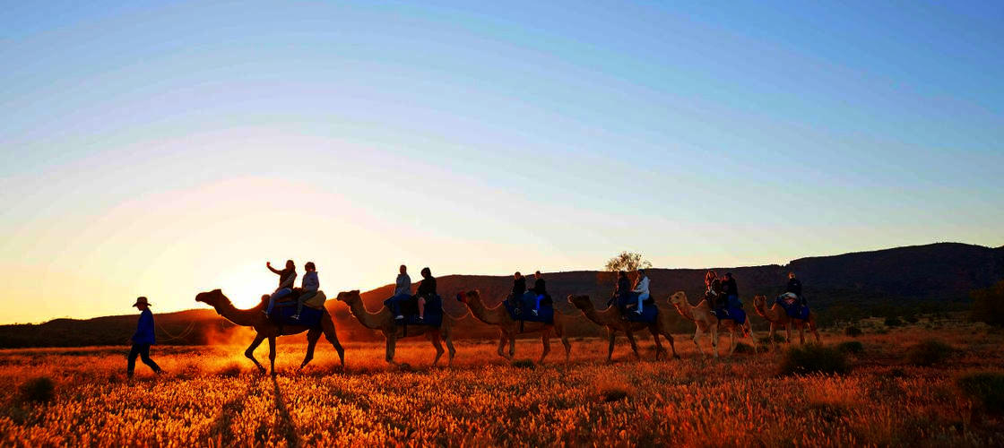 Alice Springs Camel Rides - 1 Hour