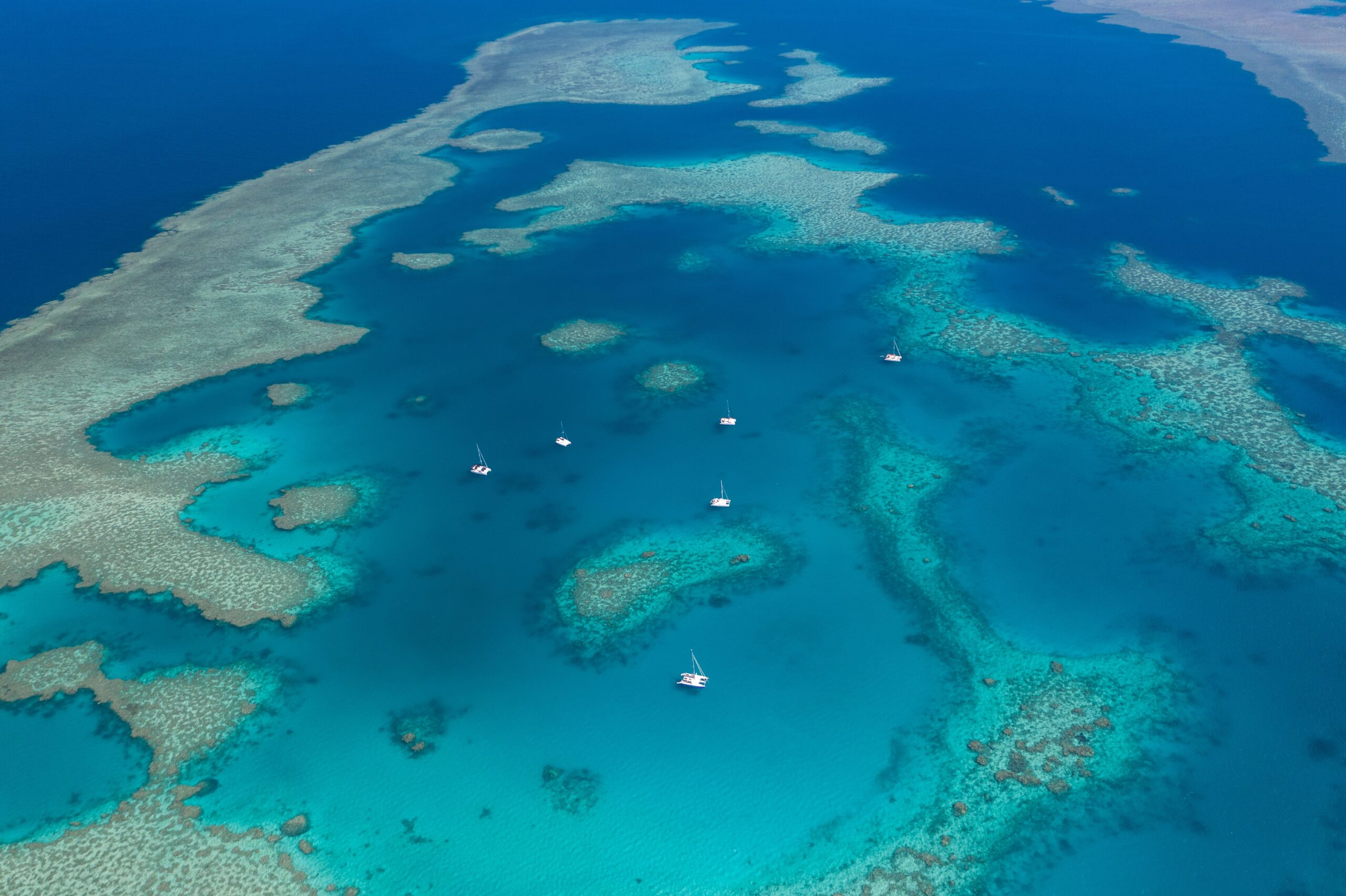 The Bees Knees - Private Charter - Outer Reef mothership liveaboard with Wings 3 and Wings 1 - coming soon