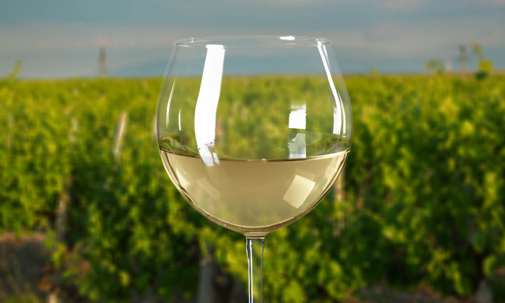 Mornington Peninsula Winery Bus Tour including Lunch and Glass of Wine