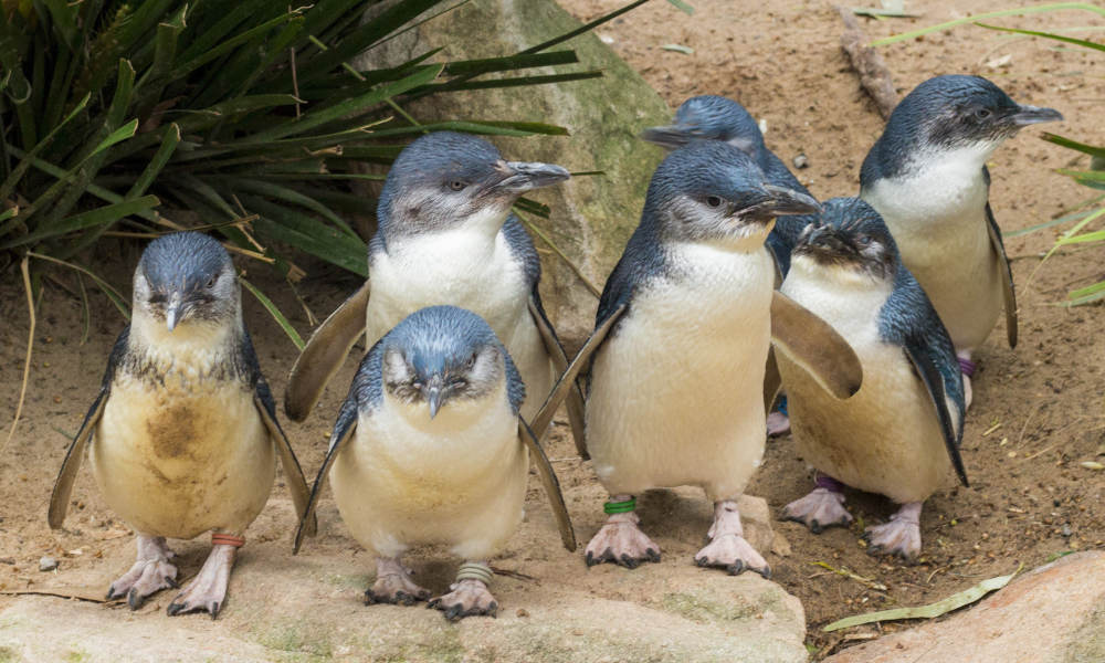 Healesville Sanctuary and Phillip Island Wildlife Park Tour