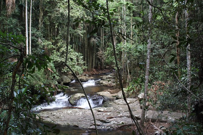 Small group Gold Coast Mountain Tour: Springbrook National Park and Mt Tamborine