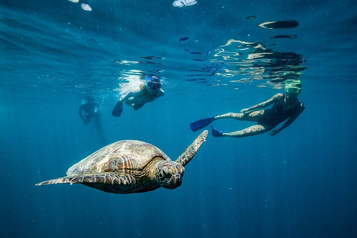 Hunter Valley Wine Tasting All Inclusive Private Bus Tour From Sydney