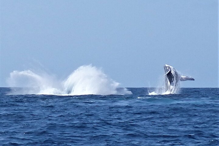 Noosa Whale Watching