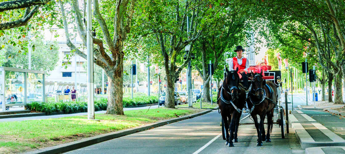 Melbourne Horse and Carriage Tours
