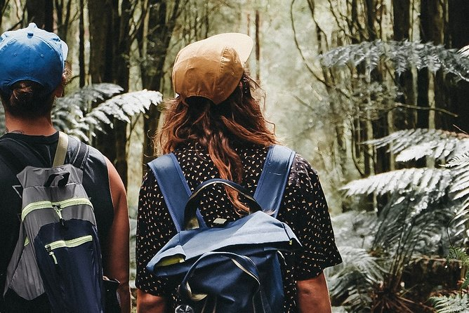 Small Group - Dandenong Ranges, Puffing Billy & Healesville Sanctuary Day Tour