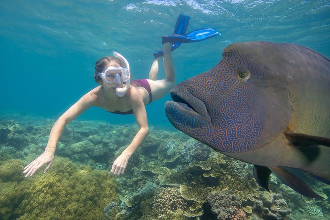 Outer Reef Pontoon Experience from Cairns