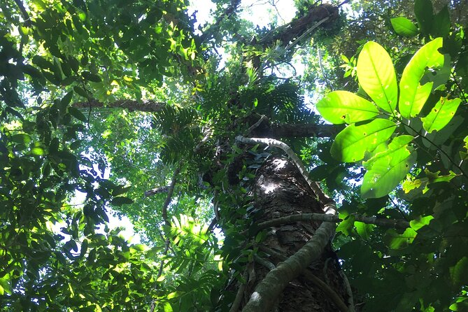 Small-Group Trekking Experience in Daintree National Park
