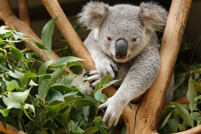 Healesville Sanctuary and Yarra Valley Day Trip from Melbourne