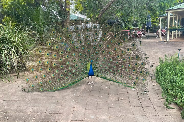 10 Day Perth to Adelaide - The Great Australian Wilderness Journey