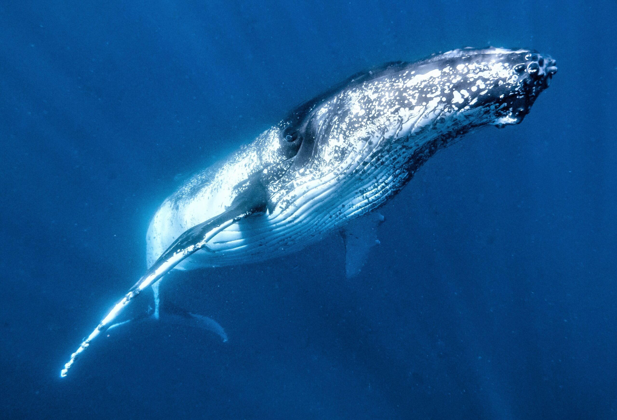 Priority Plus Humpback Whale Tour Booking