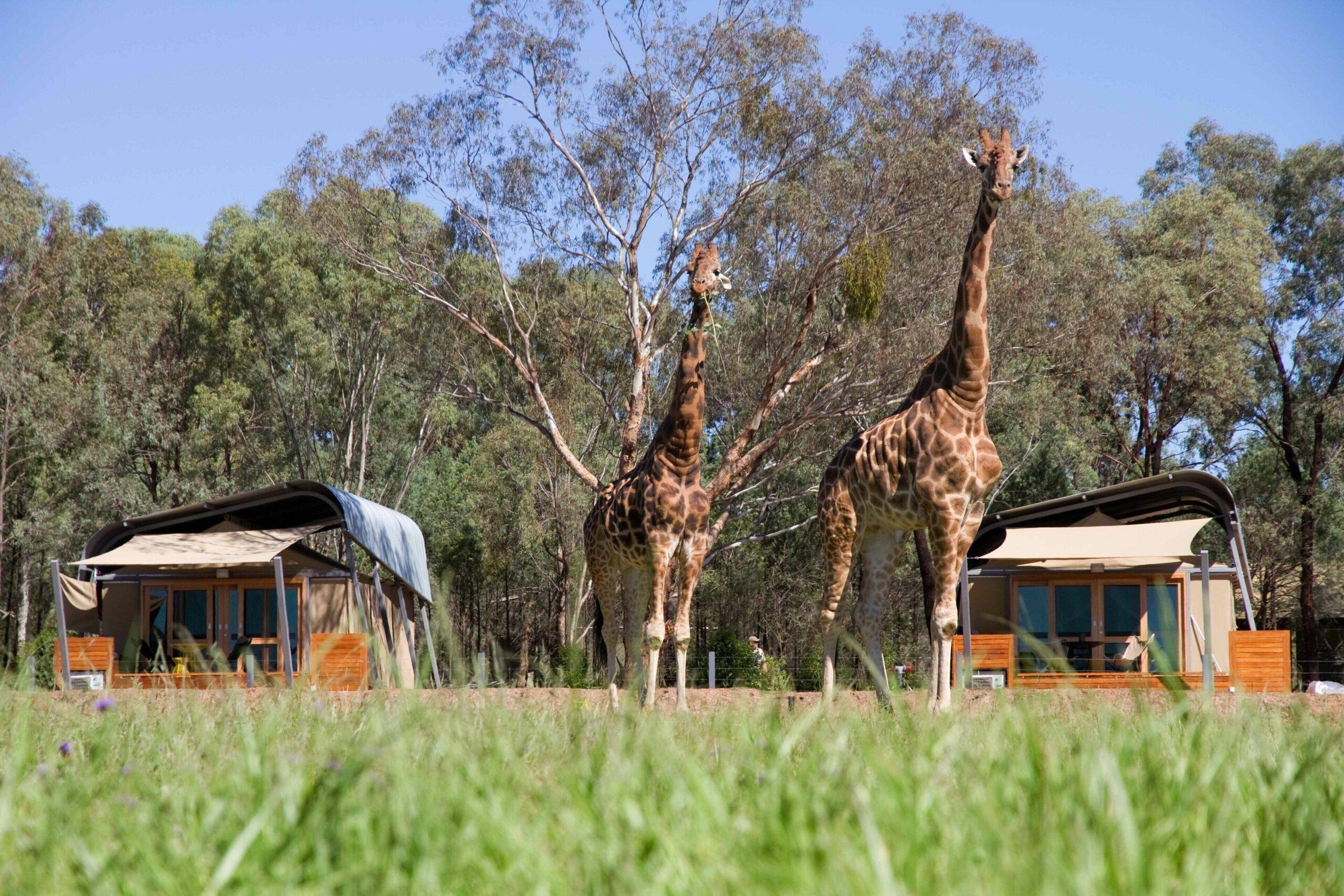 Zoofari Lodge at Taronga Western Plains