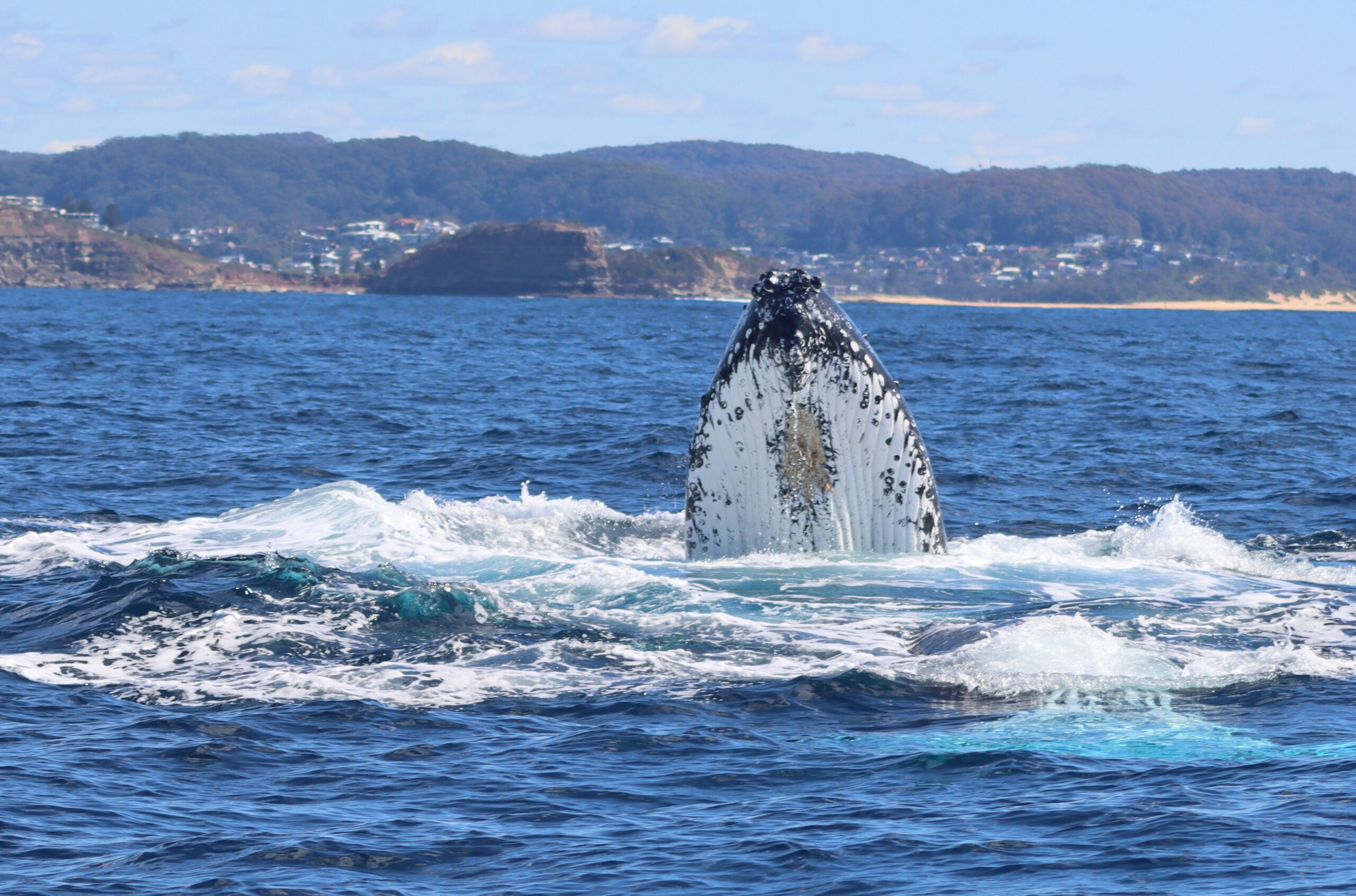 Whale Watching Terrigal Midweek