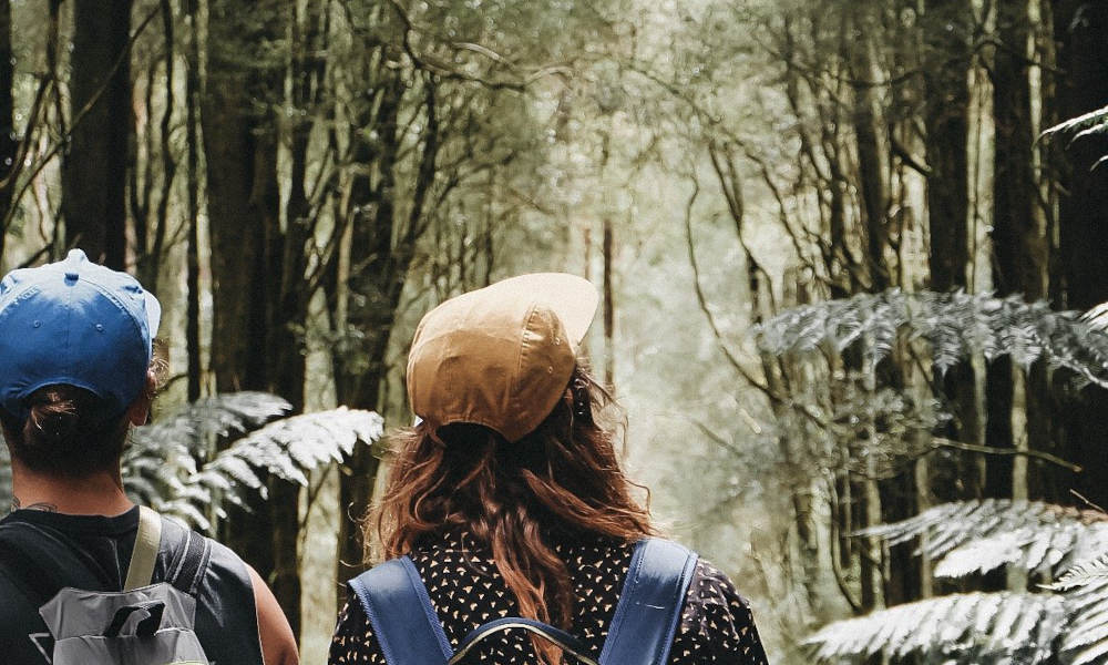 Yarra Valley and Dandenong Ranges Private Tour from Melbourne