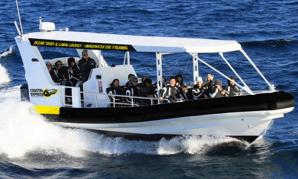 Mooloolaba Whale Watching Experience