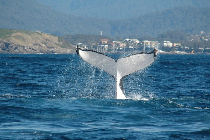 Coffs Harbour Whale Watch Experience