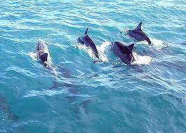 Dolphin Spotting River Cruise