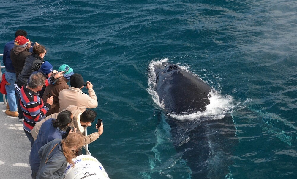 Augusta Whale Watching Experience
