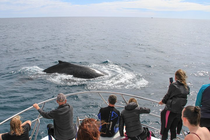 Whale Shark and Humpback Whale Day Trip Aug - Sept